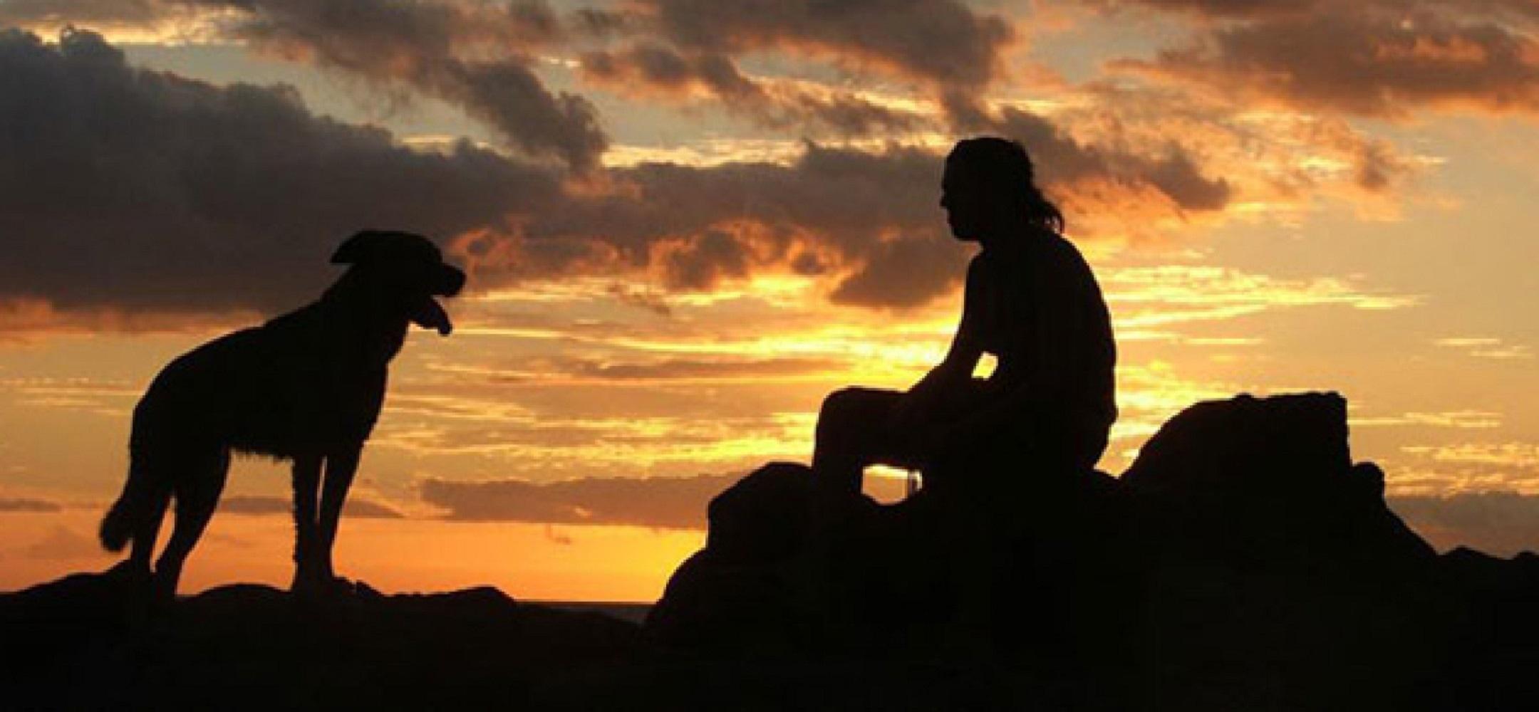 Matrimonio Tra Uomo E Animale : Rapporto uomo cane utilizzo o coinvolgimento l